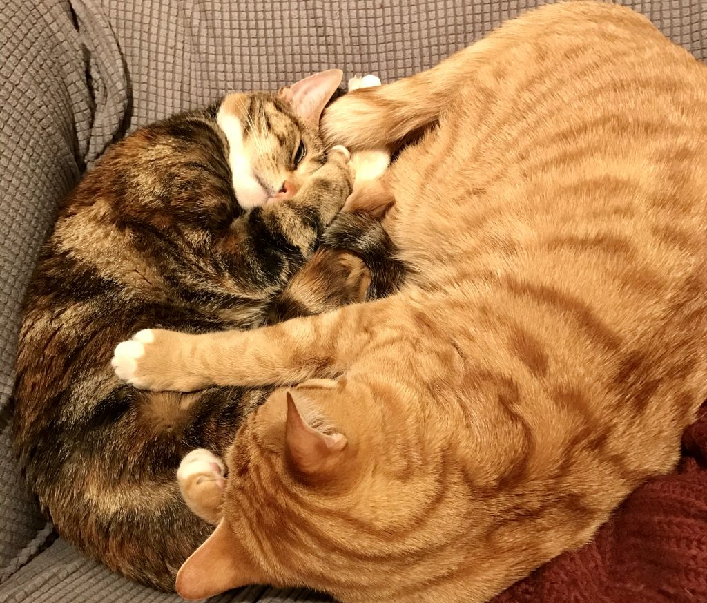 cats curled on chair